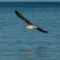 Блики на крыльях :: Павел Руденко