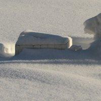 Снежный барс :: Aлександр Рыжов