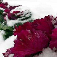 Первый снег :: Светлана Меньшенина