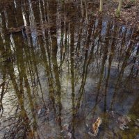 Да, весна это! :: Андрей Лукьянов