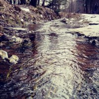 В озябший мир пришла весна :: Daria Zhdanova