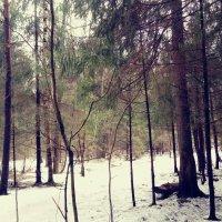 Это лес :: Daria Zhdanova