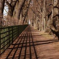 март Летний сад :: александр
