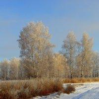 Природа Сибири. :: nadyasilyuk Вознюк