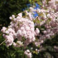 Весна пришла-17. :: Руслан Грицунь