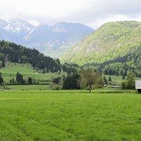 Зеленая долина :: Николай Танаев