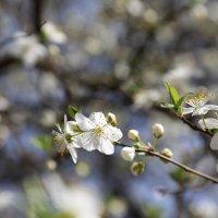 Весна пришла-23. :: Руслан Грицунь