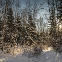 последние кадры зимы :: юрий макаров