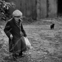 если чёрный кот дорогу перешёл :: Gala *