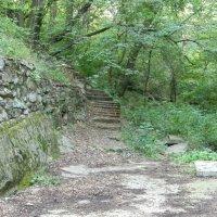 #лестница лес# :: Eva Dark13