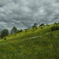 Перед грозой. В лугах.Before the storm. In the meadows. :: Юрий Воронов