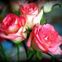 цветы любимым-розы :: Олег Лукьянов