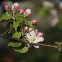 Весна пришла-33. :: Руслан Грицунь