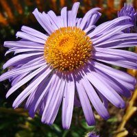 Природное сочетание цветов :: Лидия (naum.lidiya)