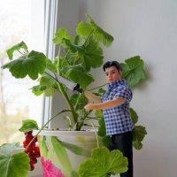 Домашний садовник:) :: Андрей Заломленков