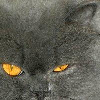 Ах,эти жёлтые глаза. :: nadyasilyuk Вознюк