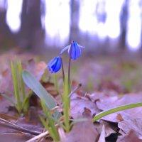 Дыхание весны. :: Антон