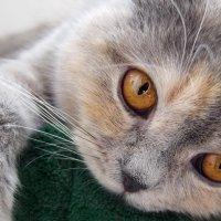 Когда твоя кошка откроет глаза, в них солнце войдёт, как в окошко. :: Людмила Богданова (Скачко)
