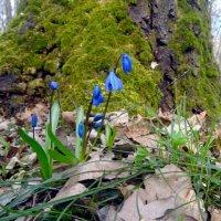 В мартовском лесу. :: Чария Зоя