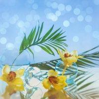 с орхидеями :: kram
