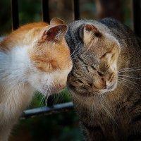 vit5   love  серия - уличные коты :: Vitaly Faiv