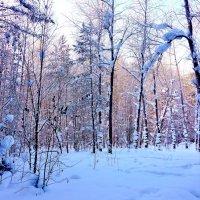 Люблю зиму :: Евгения Корнилкова