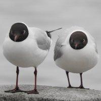 Чайки :: Александр Михайлов