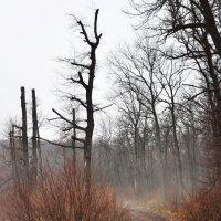 По дороге в туман :: Мария Панькина