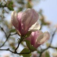 Весна пришла-36. :: Руслан Грицунь