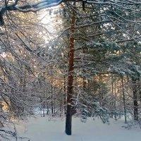 Солнечное утро :: ВладиМер