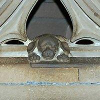 собачка Страсбургского собора :: Александр Корчемный