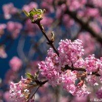 Весна :: Lana Kasiková