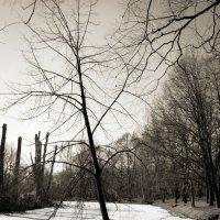 Ползущее дерево :: Юлия Фотолюбитель