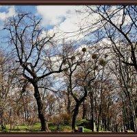 Весна в Мариинском парке :: Владимир Бровко