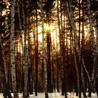 В лесу перед закатом :: Сергей Царёв