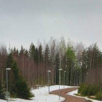 А теперь все в лес на прогулку.. :: Tatiana Markova