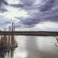после дождя :: Алина Гриб