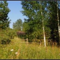 Ограда у старого поля :: Татьяна