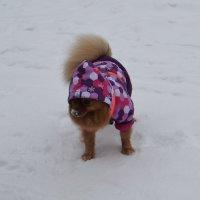 опять зима... :: Галина R...