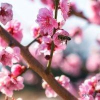 Весна  стучится .. :: Николай Ковтун