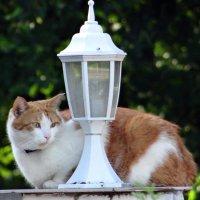 Кот, улица,фонарь... :: Алексей Цветков