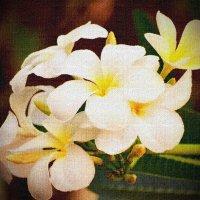 И снова чудные цветы... :: Татьяна Евдокимова