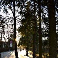 Молодцы, сохранили деревья! :: Марина
