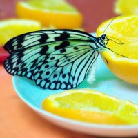 Бабочки летают, бабочки... :: Валерий Лазарев