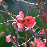 Весеннее цветение. :: Оля Богданович