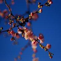 Spring :: Анна Сасина