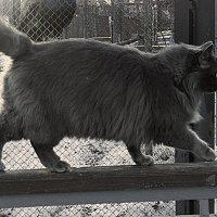 кошка :: Юлия Денискина