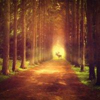 Утро в лесу :: Фотохудожник Наталья Смирнова