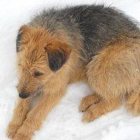 собака друг человека :: Александр Попков