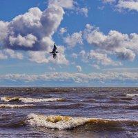 Между небом и водой :: Ольга СПб